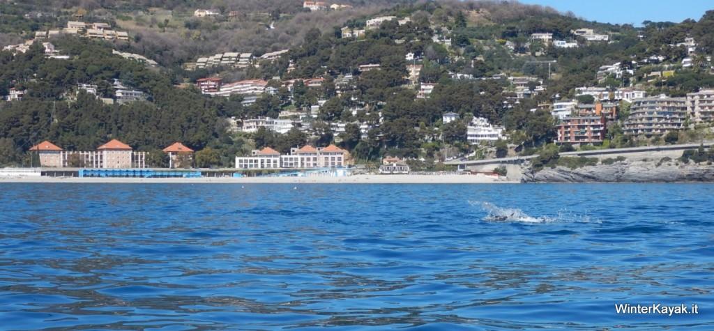 Delfini all'Isola di Bergeggi