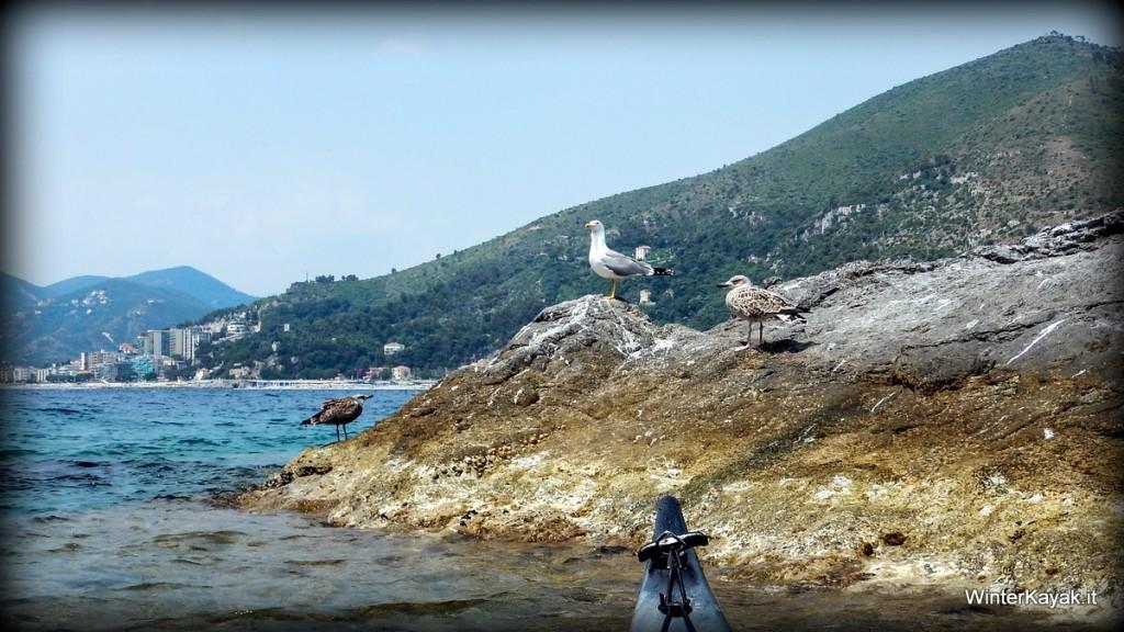 Gabbiani all'Isola di Bergeggi