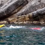 Un nuotatore davanti all'Isola di Bergeggi