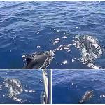 Delfini a Noli